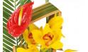 vue sur un anthuriums rouge et des cymbidiums jaune