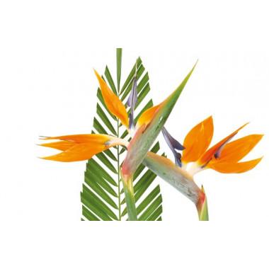 vue sur deux strelitzia de la composition de fleurs tropique