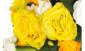 zoom sur une rose de couleur jaune
