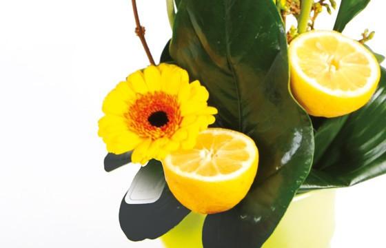 image d'un gerberas de couleur jaune