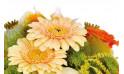 zoom sur des germinis de la composition de fleurs Mignon