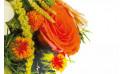 zoom sur une rose rose de la composition de fleurs orange