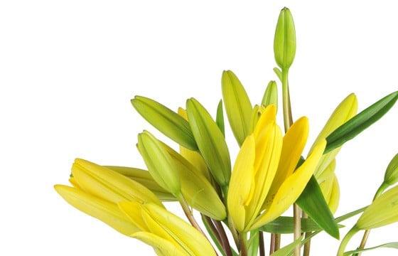 Image des Lys jaune de la composition de fleurs