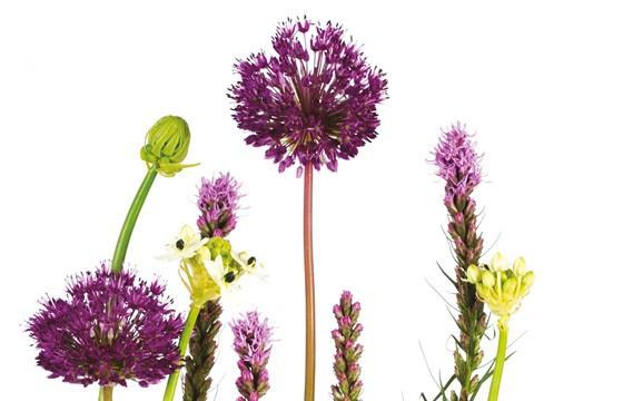 image des fleurs sur le haut de la composition découverte