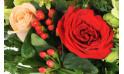 vue sur une magnifique rose rouge