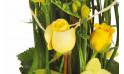 vue sur une magnifique rose jaune