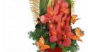 vue sur les orchidées cymbidiums rouge-orangé de Mascota