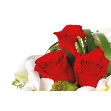vue sur une rose rouge