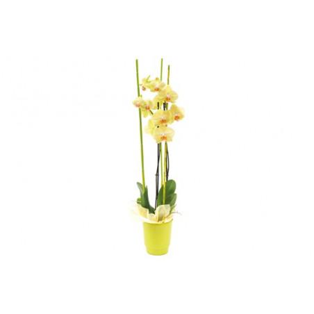 image de l'orchidée jaune Intensité