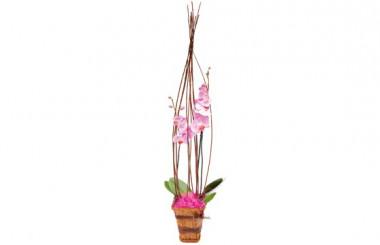 image de l'orchidée rose Cage d'amour