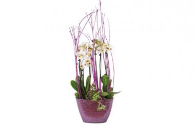 image sur la coupe d'orchidée blanches à coeurs rose