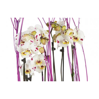 Coupe d 39 orchid es blanches coeur rose livraison de - Peut on couper les racines des orchidees ...