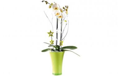 L'Agitateur Floral |image de l'Orchidée blanche double branche