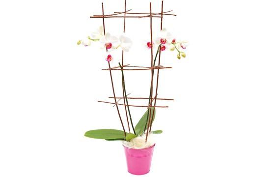 image de l'orchidée blanche en cage
