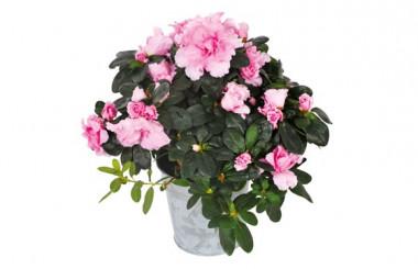 l 39 agitateur floral livraison de fleurs fraiches envoi de bouquets partout en france. Black Bedroom Furniture Sets. Home Design Ideas