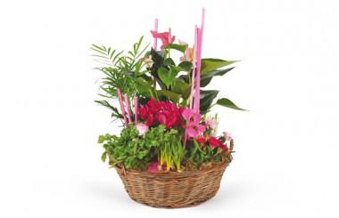 image de la Composition de plantes Le Jardin des Druides