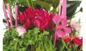 vue sur le centre de la Composition de plantes Le Jardin des Druides