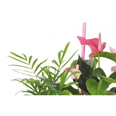 vue sur le haut de la Composition de plantes Le Jardin des Druides