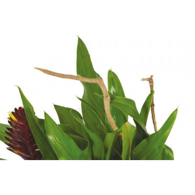 image du feuillage du panier de plantes Antho le Jardinier