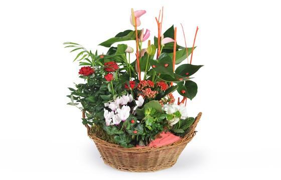 coupe de plantes vertes et fleuries d 39 int rieur la corbeille fleurie l 39 agitateur floral. Black Bedroom Furniture Sets. Home Design Ideas