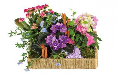 image de l'assemblage de plantes le jardin enchanté