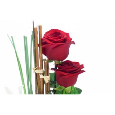 zoom sur deux roses rouges