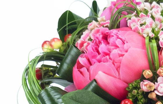 L'Agitateur Floral | vue sur une magnifique pivoine de couleur rose