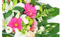 zoom sur les gerberas roses