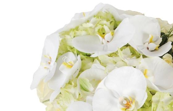 vue sur les orchidées blanches