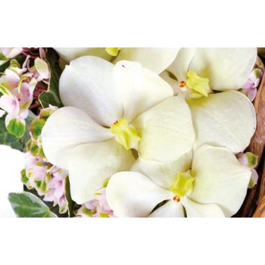 zoom sur un fleuron d'orchidée vanda du coeur en fleurs Douceur