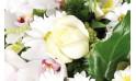 zoom sur une magnifique rose blanche