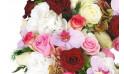 zoom sur une orchidée phalaenopsis rose mauve