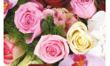 zoom sur des roses roses et une rose blanche