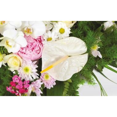 zoom sur un magnifique anthurium blanc du coeur Archange