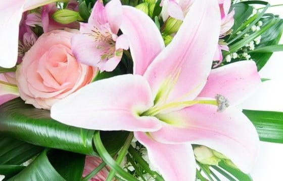 L'Agitateur Floral | vue sur un splendide lys rose