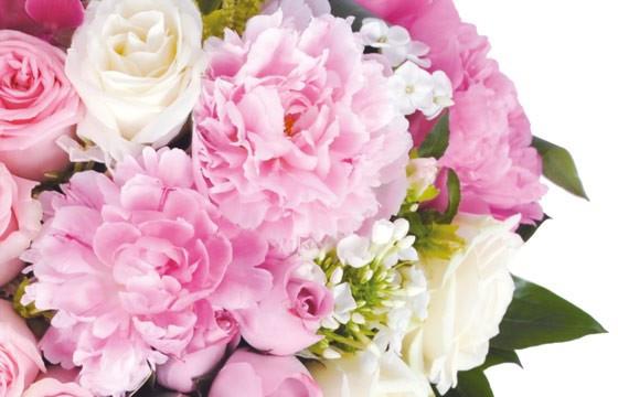 vue sur de magnifique pivoine de couleurs roses