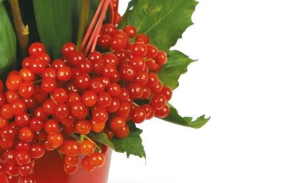 L'Agitateur Floral |zoom sur les hypéricums de couleurs rouges