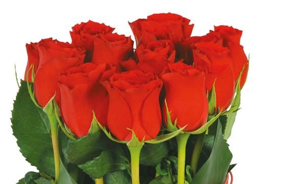L'Agitateur Floral |vue sur les roses rouges