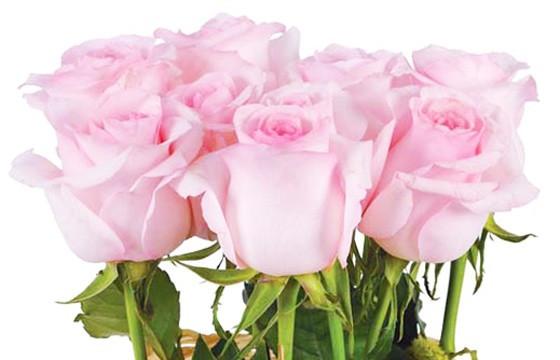 Fagot de roses roses | livraison à domicile composition de roses -  L'agitateur floral