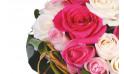 vue sur une rose rose