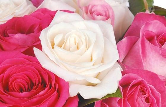 Bouquet rond de roses blanches et roses | livraison 7/7 en 4 heures ...