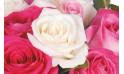 vue sur une rose blanche