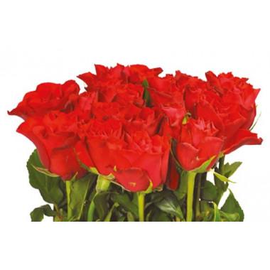 vue sur les roses rouges