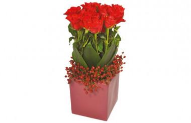 image de l'arrangement floral carré de roses rouges