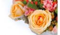 zoom sur une magnifique roses de couleur orange-miel