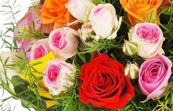zoom sur des roses petits boutons