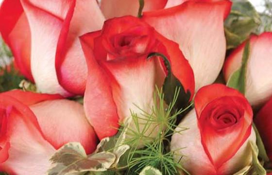 zoom sur une magnifique roses rouges de la composition Subtil