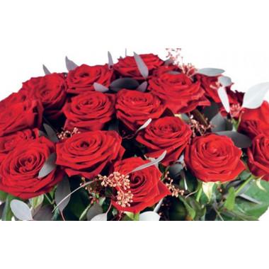 zoom sur les roses rouges