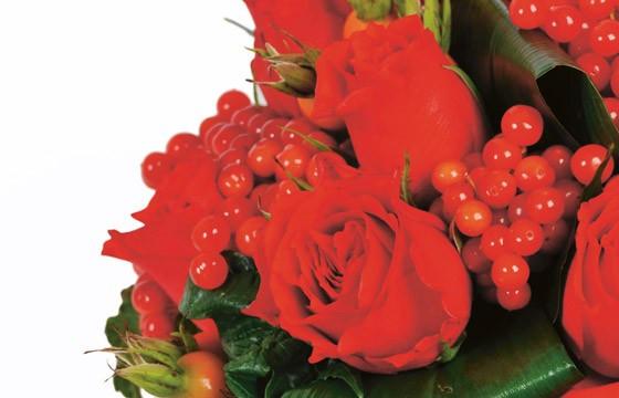 zoom sur les roses rouges et les baies