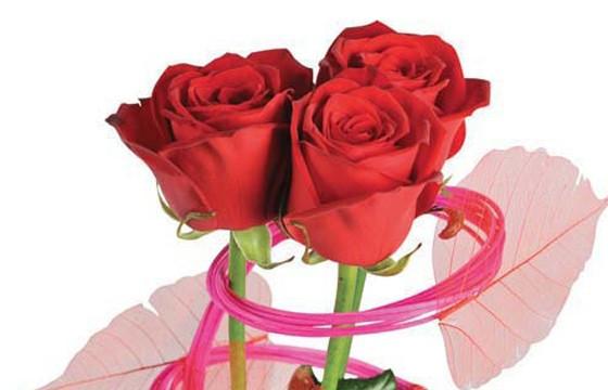 zoom sur les trois roses rouges